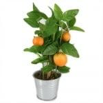 Deko Orangenbäumchen, 20 cm