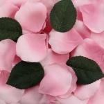 70 Rosenblätter in Rosa