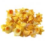 22 Narzissen als Streudeko in Gelb, 20 mm