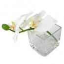 Vierkantglas mit Dekosteinen und Orchideenzweig in Weiß