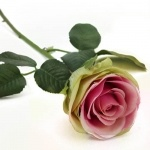 Kunstblume Rose in Creme/Pink