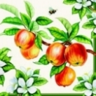 Servietten Apple Tree cream