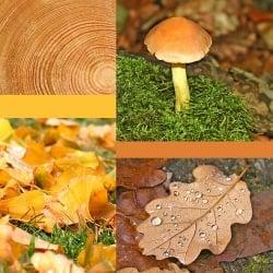 Tischdeko Wald Mit Naturmaterialien Tafeldeko