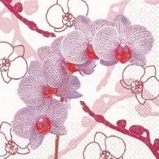 wundersch ne tischdeko mit orchideen tafeldeko. Black Bedroom Furniture Sets. Home Design Ideas