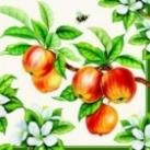 servietten_apple