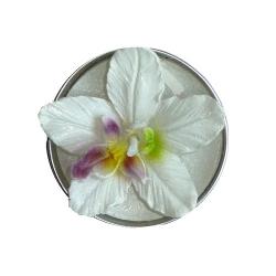 tischdeko mit orchideen k niglich und sehr stilvoll tafeldeko. Black Bedroom Furniture Sets. Home Design Ideas